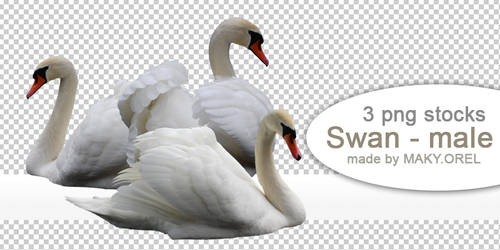 PNG (pre-cut) STOCK: Swan - male by MAKY-OREL