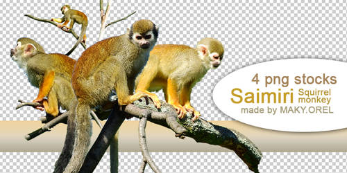 PNG (pre-cut) STOCK: Saimiri (squirrel monkey) by MAKY-OREL