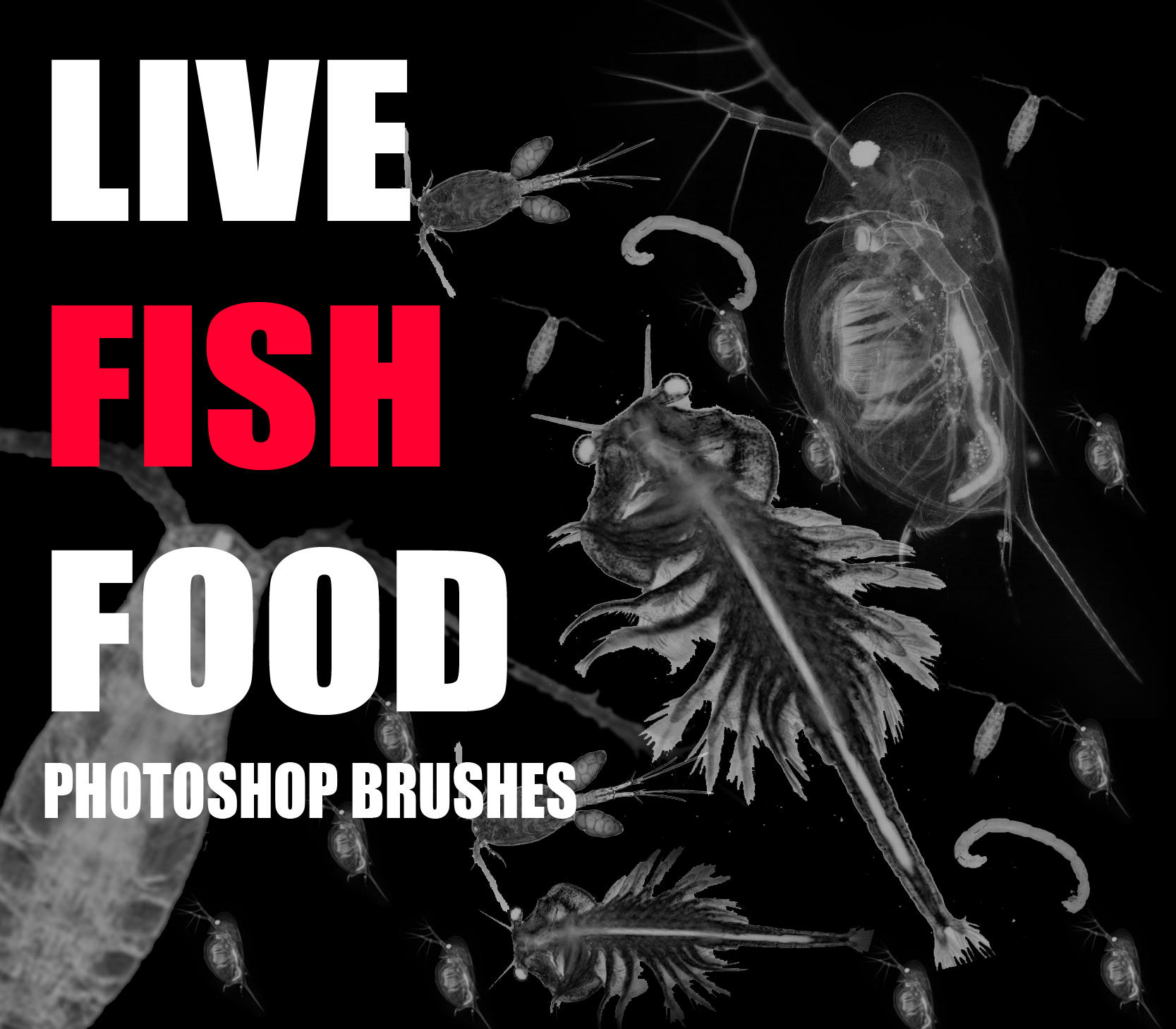 Live fish food brushes by the mattness on deviantart for Live fish food
