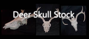 Deer Skull Stock by Sh3ikha