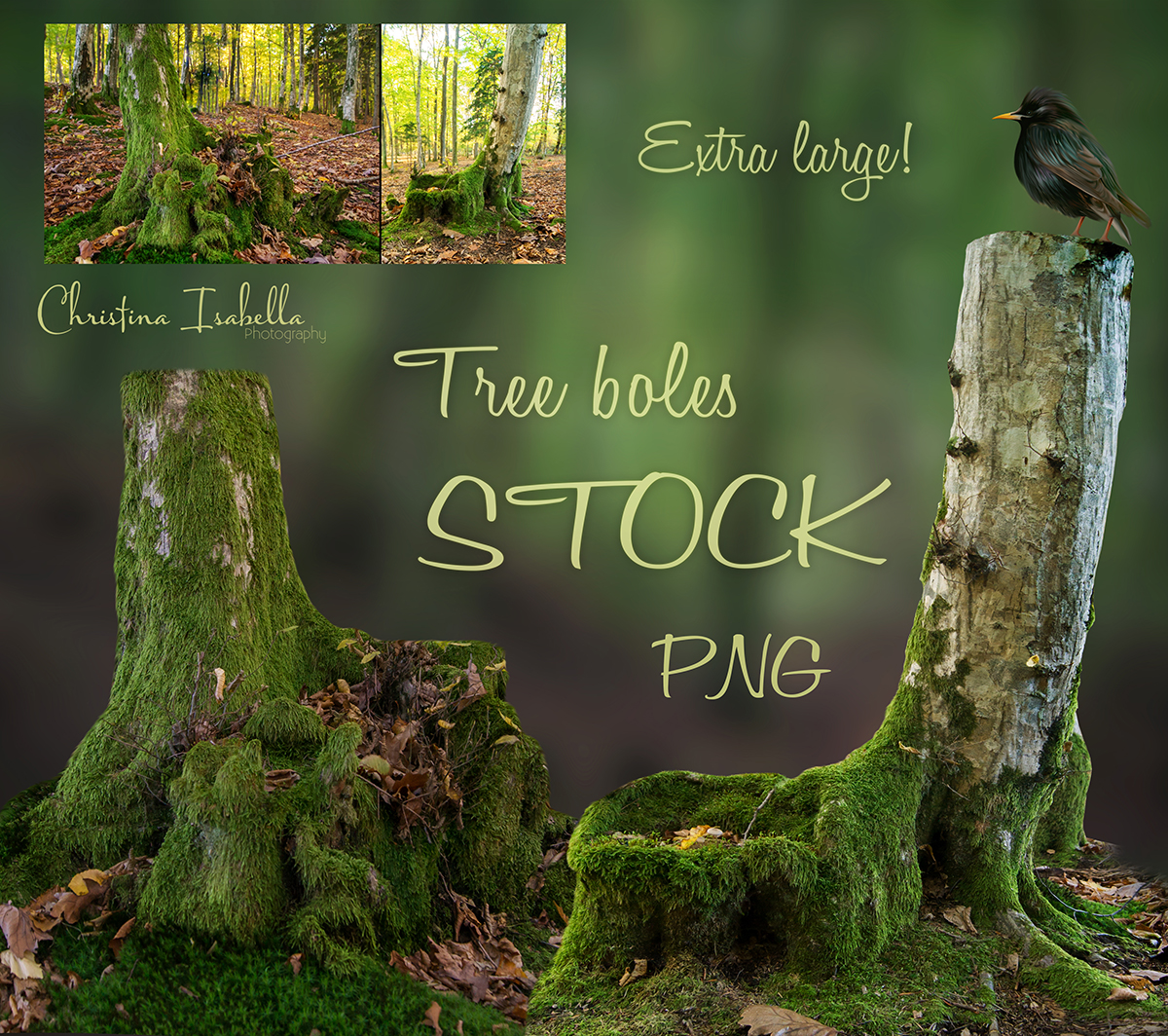 Tree boles PNG Stock