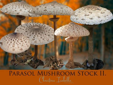 Parasol Mushroom Stock II