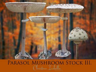 Parasol Mushroom Stock III