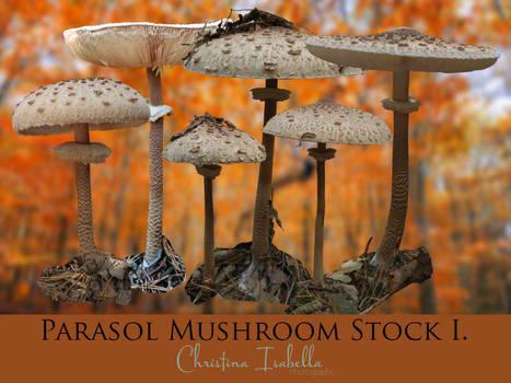 Parasol Mushroom Stock I