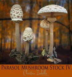 Parasol Mushroom Stock IV