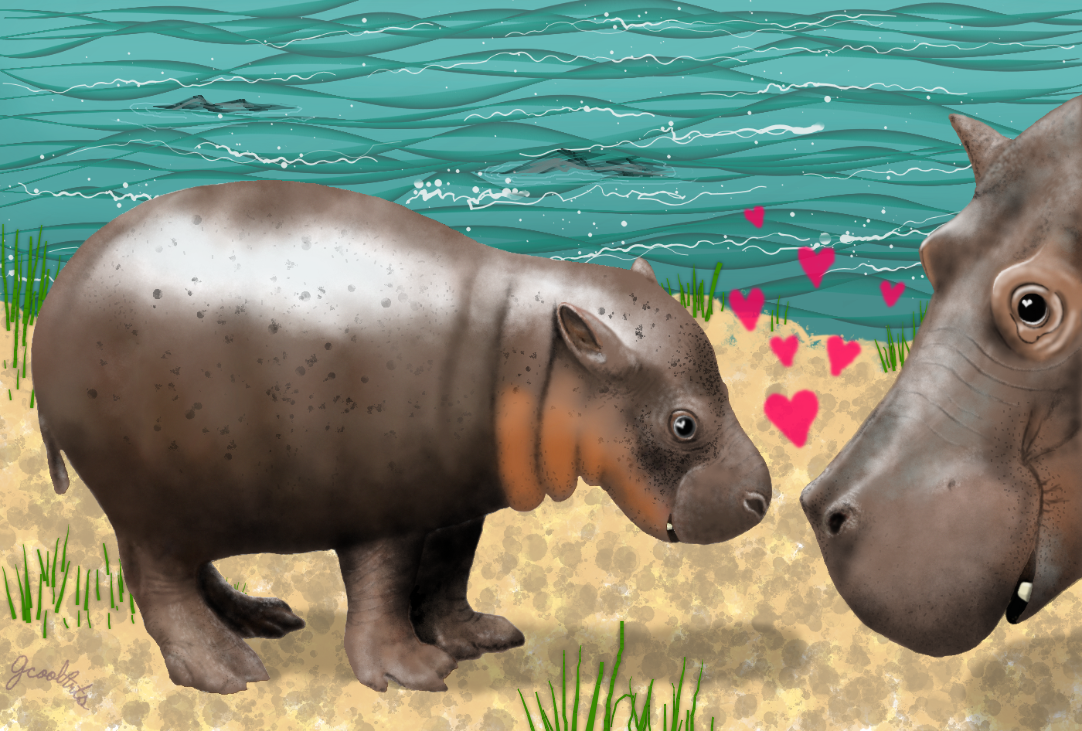 A baby hippo and it's mom :) -Muro Challenge- by JCoolArts