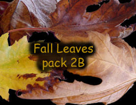 Fall Leaves pack 2b by Treeclimber-Stock