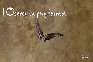 Cutout PNG - Osprey 14