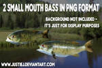 PNGS - Small Mouth Bass