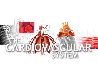 The Cardiovascular System by ice-works