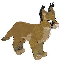Petz -- Caracal Cat