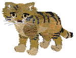 Petz -- Sandcat