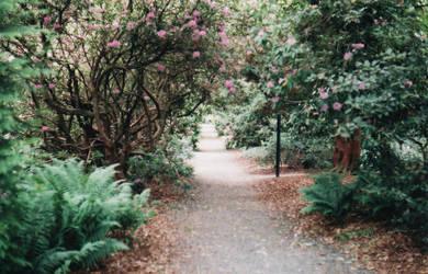 Path. by Gazza282