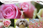 Sweet Summer - FREE Photoshop Actions