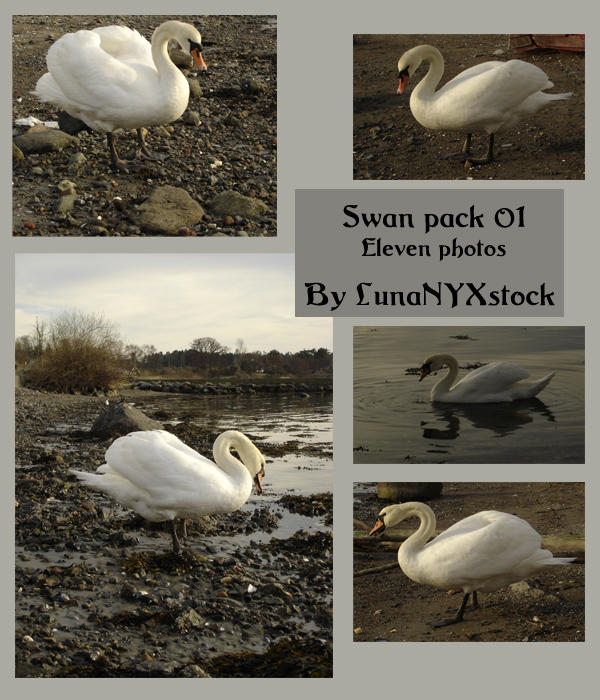 Swan pack - 01 by LunaNYXstock
