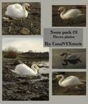 Swan pack - 01