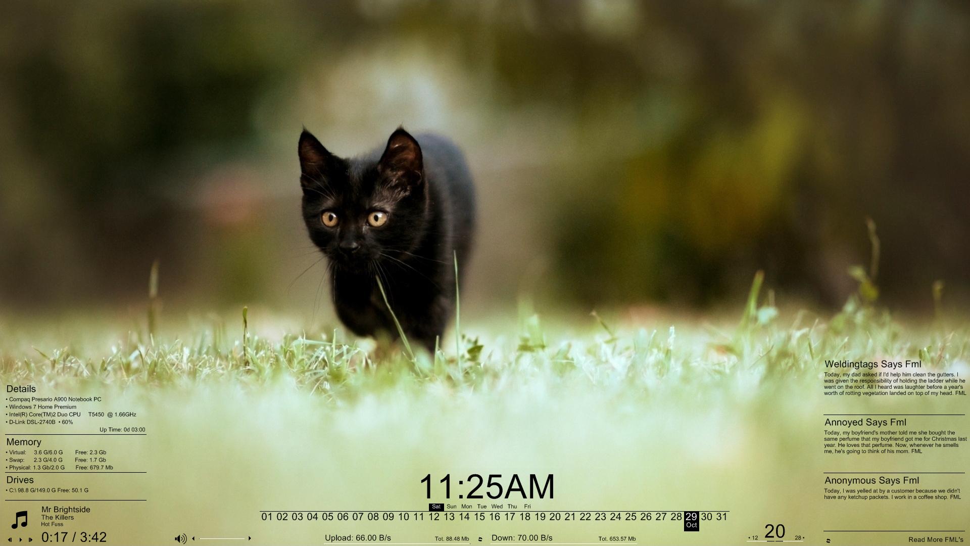 Meow Meter