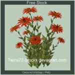 Twins72-Stocks-free-14
