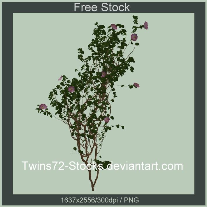 Twins72-Stocks-free-18 by Twins72-Stocks