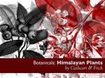 Botanicals 6 - Himalayas