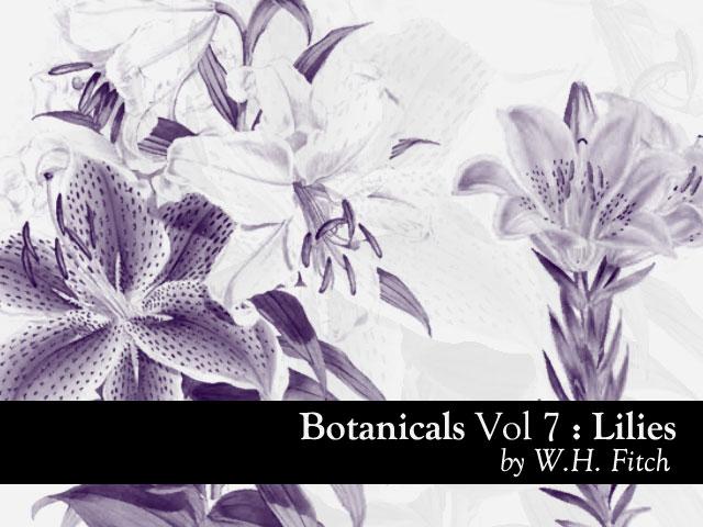Botanicals 7 - Lilies