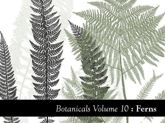 Botanicals Volume 10 - Ferns by remittancegirl