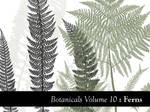 Botanicals Volume 10 - Ferns
