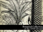 HMS Herald's Voyage