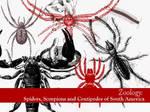 Spiders, Scorpions, Centipedes