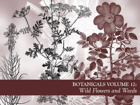 Botanicals Vol 12