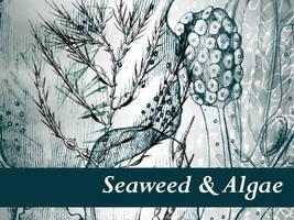 Seaweed and Algae