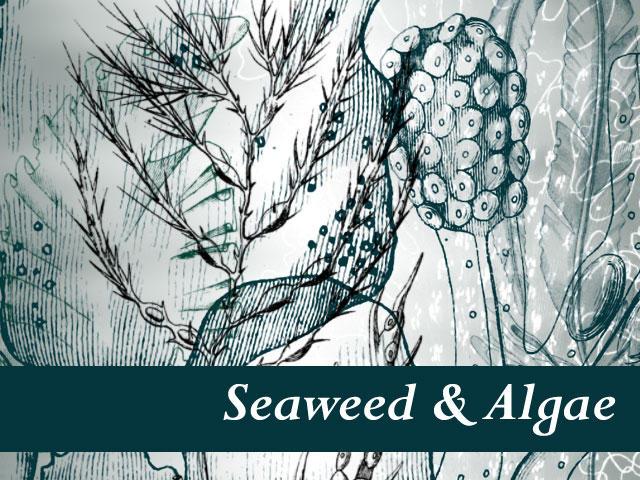 Seaweed and Algae by remittancegirl