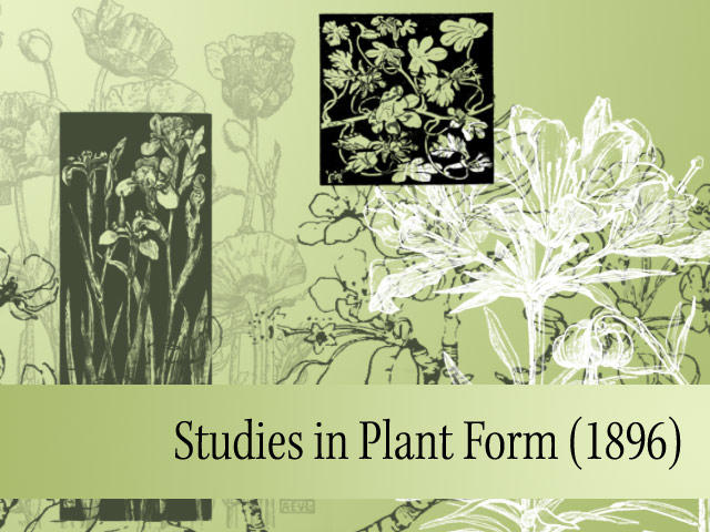 Studies in Plant Form by remittancegirl
