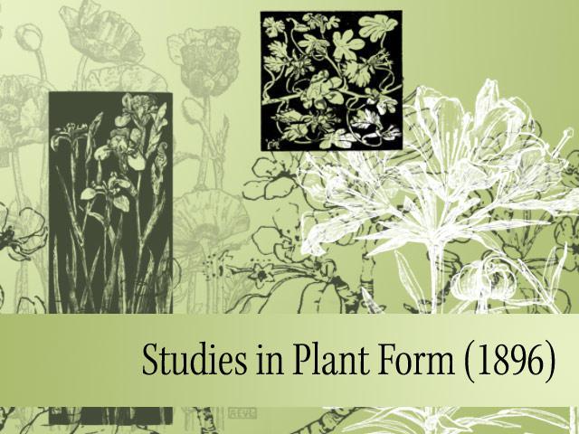 Studies in Plant Form by remittancegirl