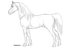 arabian stallion lineart