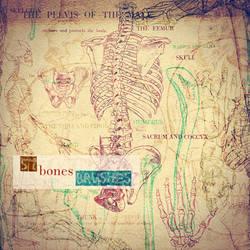 Bones Brush Sampler by asunder