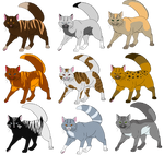 Warrior Tom Cat Adopts (5 Points Each) CLOSED