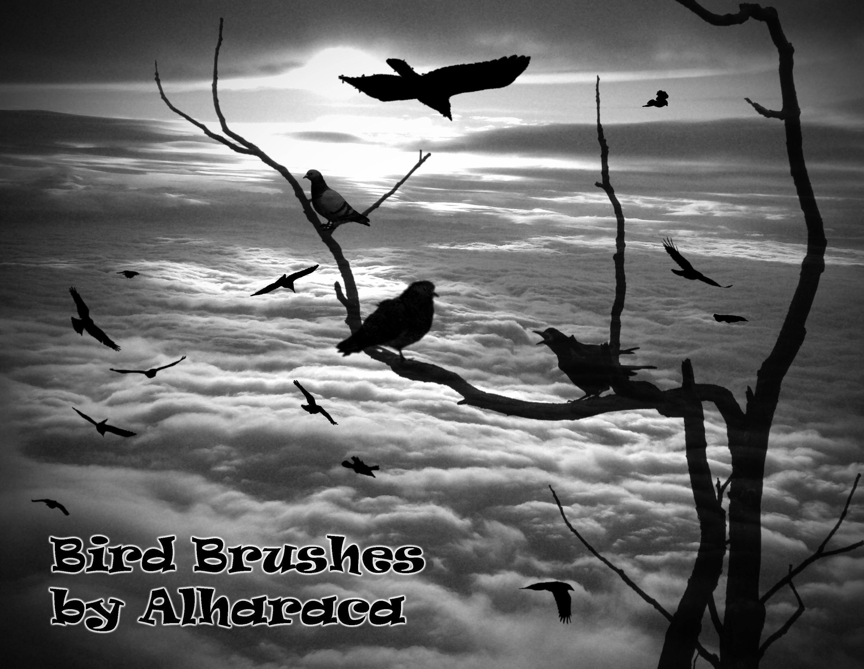 Bird Brushes 1 by Alharaca