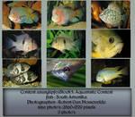 Contest fish pack 5 by AzurylipfesStock