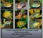 Contest fish pack 6 by AzurylipfesStock