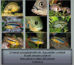 Contest fish pack 10 by AzurylipfesStock