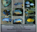 Contest Fish pack 17