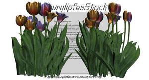 3D object - tulips