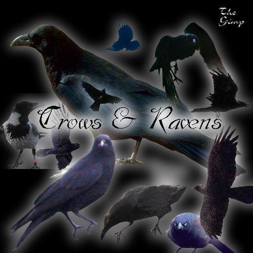 Crow Brush Set by faeryfroggy-stock