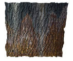 Rusty Oak PSD