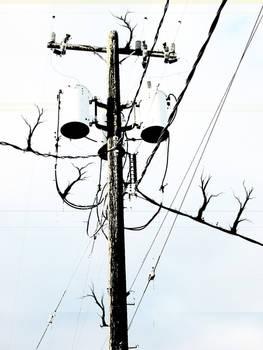 telegraphecosystem