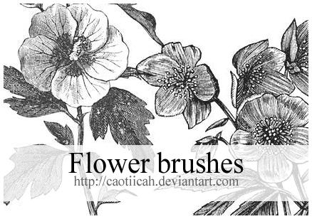 Flower brushes 03 by caotiicah