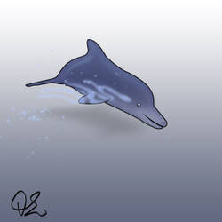 Dolphin Jump animation
