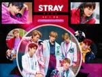 +STRAY KIDS (10+ STAR)   PHOTOPACK   08