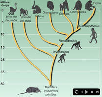 Primates evolution. by AmadeuBlasco